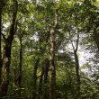 2021/06-12  本州ツアー 「世界自然遺産白神山地ブナ林&藤里駒ケ岳」